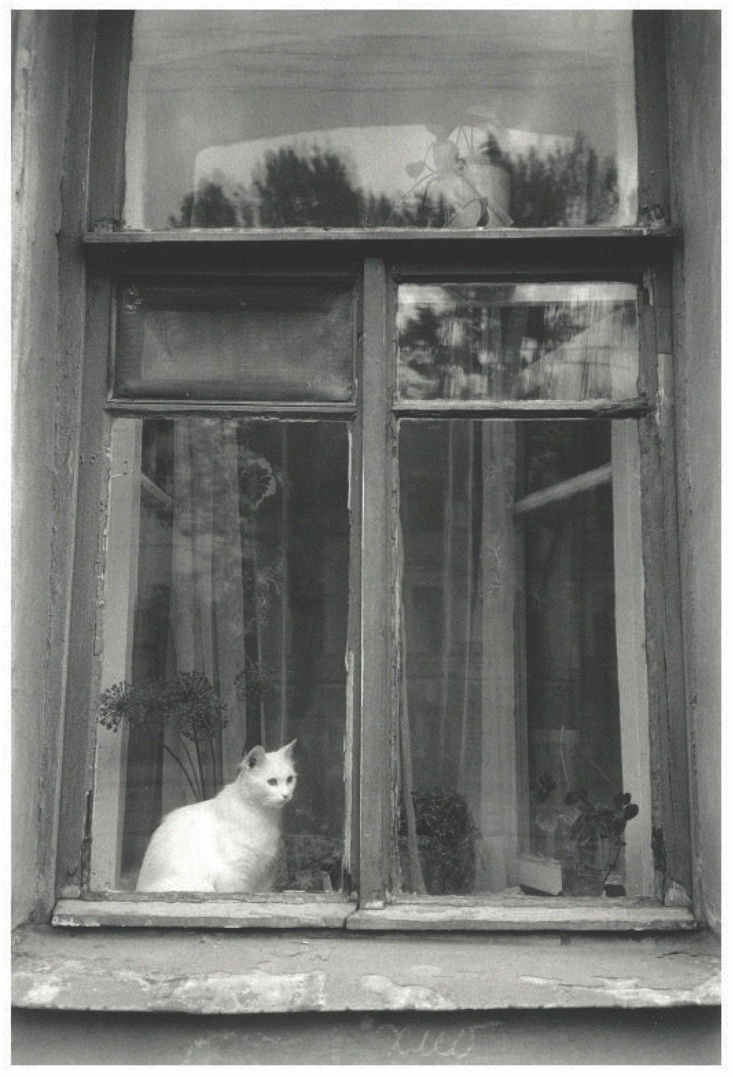 Cat in Window, Russia 1992